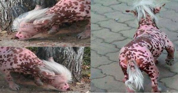 عاجل: ظهوراغرب حيوان يثير الرعب بين سكان الصين !!! سبحان الله