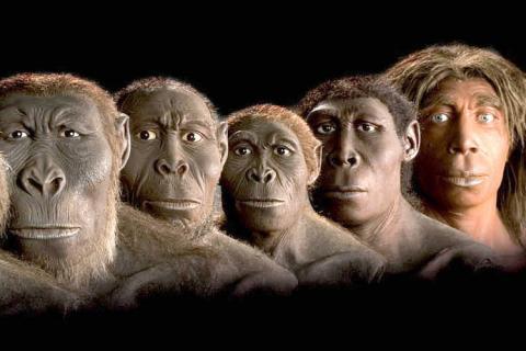 هل القرد أصله إنسان أم الإنسان أصله قرد؟